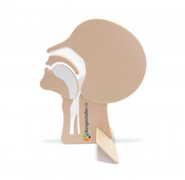 Kopfschnittmodell beige